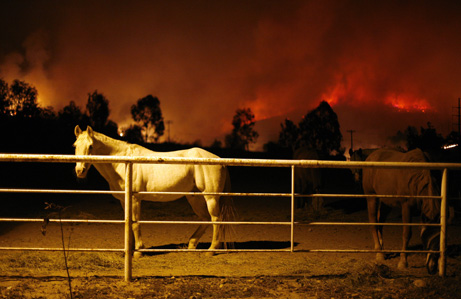 Image result for image volunteer help with horses with trauma from fire disaster