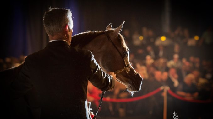 Valley-born filly sets sales record at auction - Santa Ynez Valley Star